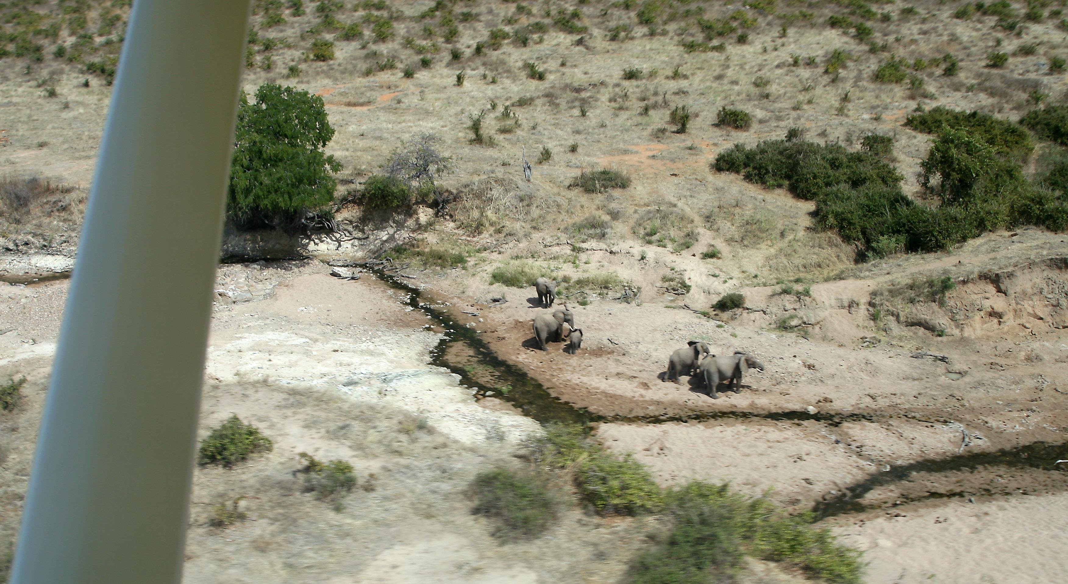 Een kudde olifanten in de rivierbedding, zoals gezien vanuit een klein vliegtuigje