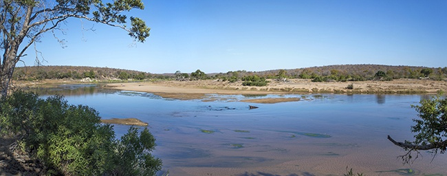 Walking along the Olifants River in Kruger National Park